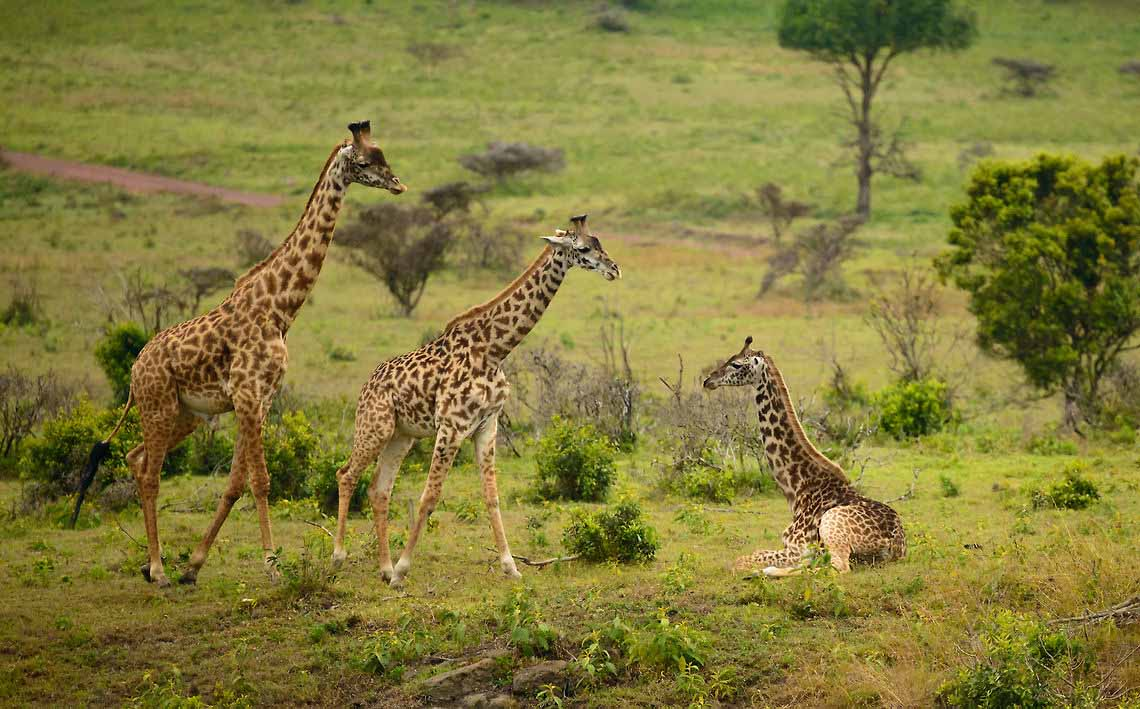 Arusha National Park - Wanderlust Africa Vacations